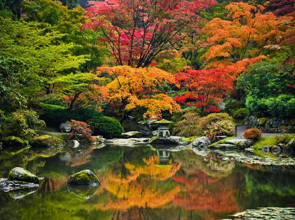 Arces japoneses en Seattle Japanese Garden